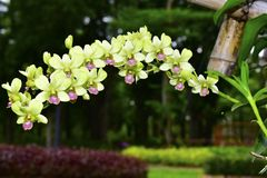Many orchids, exotic species, bright colors beatyfull stock photos