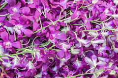 Many orchids. Songkran festival, Thailand. Royalty Free Stock Images
