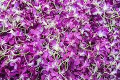 Many orchids. Songkran festival, Thailand. Royalty Free Stock Photo