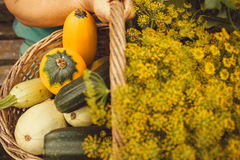 Many organic vegatables, zucchini and greens in hands of farmer or gardener during autumn harvesting time.  royalty free stock photos