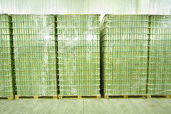 Many packed cans of mojitos in Ochakovo factory Stock Photography