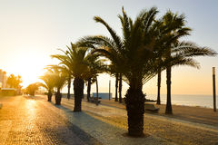 Many palm trees on sunset tropical cityscape Stock Image