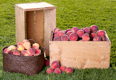 Many peaches in wooden crate and basket Royalty Free Stock Photography