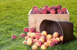 Many peaches in wooden crate and basket Stock Image
