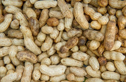 Many peanuts in shells, one upon the other Royalty Free Stock Photo