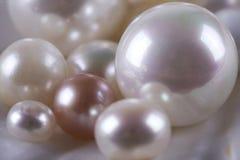 Free Many Pearls On The Seashell Royalty Free Stock Photos - 12856538