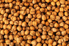 Many pecans nuts Stock Image