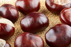 Many peeled chestnuts lie on hessian. Horse-chestnuts.  royalty free stock image