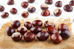 Many peeled chestnuts lie on hessian. Horse-chestnuts.  royalty free stock photo