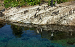 Penguins in Alesund aquarium, Norway Stock Photo