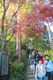 Many people visiting and trekking at Mt.Takao in the autumn Royalty Free Stock Images