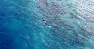 Many people young boys girls snorkeling over coral reef with drone aerial flying view in crystal clear aqua blue. Shallow water royalty free stock photo