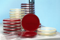 Many petri dishes stacked in workbench of laboratory Royalty Free Stock Images