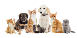 Many pets. Looking on a white background Royalty Free Stock Photos