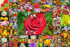Beautiful flowers collage postcard Royalty Free Stock Photos