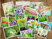 Many pictures of flowers. Collage. Selective focus stock photography