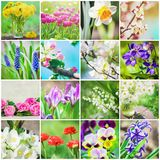 Many pictures of flowers. Collage. Selective focus Royalty Free Stock Images