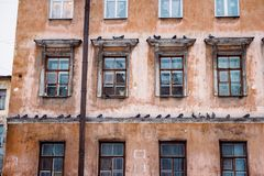 Many pigeons on a cornice of a house. In the downtown of Saint Petersburg royalty free stock images