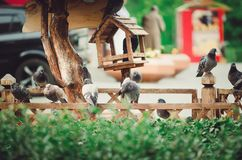 Many pigeons sit next to the bird feeder. stock images
