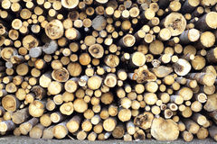 Many pine logs stacked closeup front view Royalty Free Stock Photos