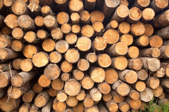 Many pine logs stacked closeup front view Royalty Free Stock Photo