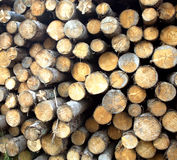 Many pine logs stacked closeup front view Royalty Free Stock Photography