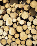 Many pine logs stacked closeup front view Royalty Free Stock Images