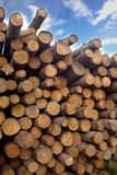 Many pine logs stacked closeup over sky with clouds Royalty Free Stock Image
