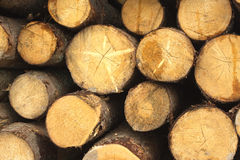 Many pine logs stacked closeup Stock Images