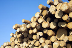 Many pine logs stacked horizontal view closeup Stock Photography