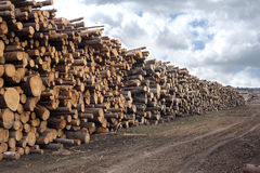 Many pine logs stacked outdoor Stock Photo