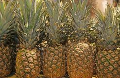 Many pineapple for sale in the local fruit market Stock Photography