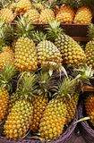 Many pineapples put in bracket. In market Royalty Free Stock Images