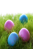Many Pink And Blue Easter Eggs On Green Grass Royalty Free Stock Photo
