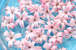 Many pink colors in water. Many gentle pink colors in blue water Stock Image