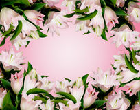Many pink lily Stock Photo