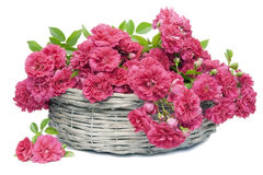 Many pink roses in basket Stock Photography