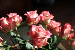Many Pink Roses Royalty Free Stock Images