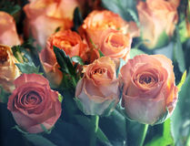 Many pink roses for shops with window glass. Many pink roses for shops with window glass Stock Photos