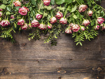 Many pink shrub roses, on the branches, laid out in a line  border ,place for text  on wooden rustic background top view Royalty Free Stock Photography