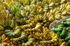 Many Pisang Awak Banana or Sugar Banana in the Market stock photo