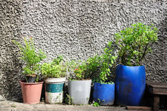 Many plant-pots from plastics gallons Stock Image