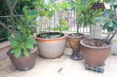 Many plants pots Royalty Free Stock Image
