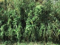 Many plants in tropical forest. Stock Photography