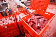 Free Many Plastic Red Boxes With Chopped Fresh Raw Meat, Stored In A Meat Factory, Industry Process. Horizontal View. Stock Photos - 179561613
