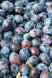 Many plums Royalty Free Stock Image