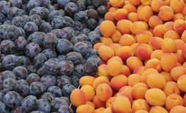 Many plums and apricots Stock Photos