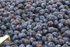 Many plums Royalty Free Stock Photos