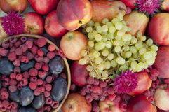 Many plums, raspberries, pears, nectarines and grapes Stock Photo