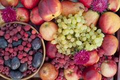 Many plums, raspberries, pears, nectarines and grapes Royalty Free Stock Photos